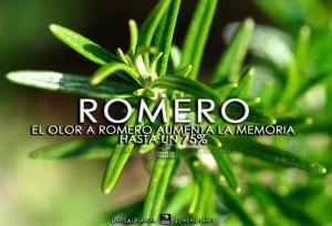 el olor del romero