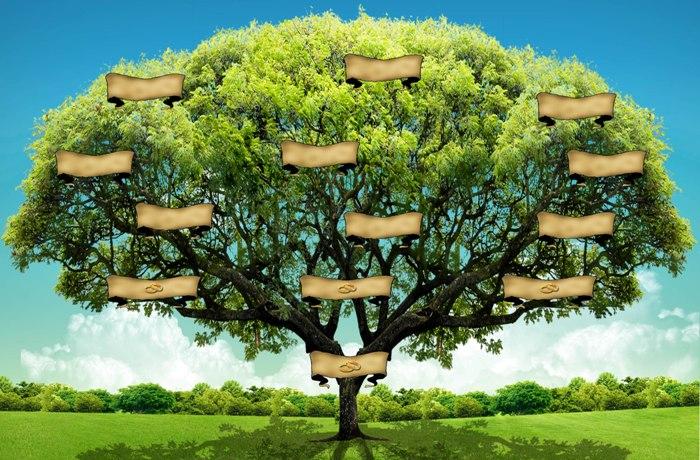 Arbol genealogico todo llega todo pasa y todo cambia for Nombres de arboles en ingles