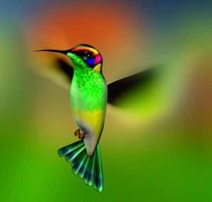 google_colibri_2013