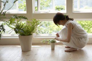 beneficios-plantas-salud-jardineria_323x216