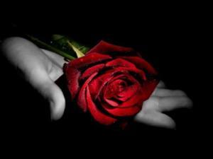 rosa_sulla_mano