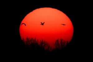 sun-with-birds