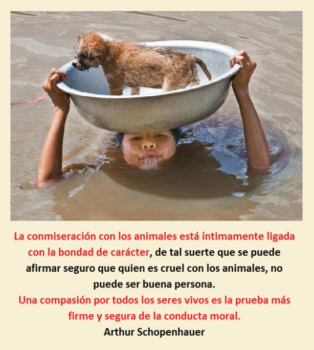 animales+schopenhauer