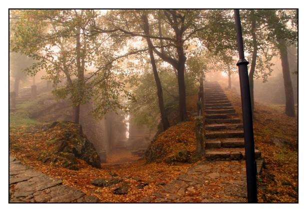 bosque-encantado-f7817366-bcbd-422a-b1db-37fe417da74b