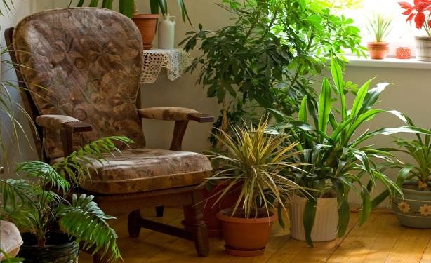 Plantas-de-interior-para-casas-rusticas-3
