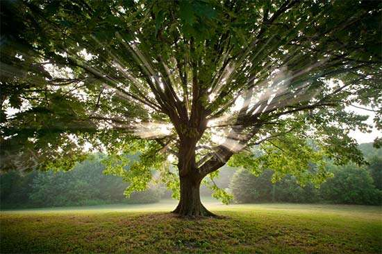 """Resultado de imagen de """"Un árbol es un depósito de energías que vienen de la Tierra y del Sol."""